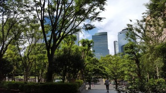 Skyscrapers and trees
